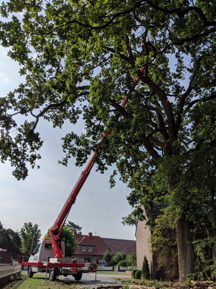 Baumpflege Arbeiten
