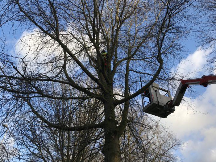 Baumpflege mittels Steiger