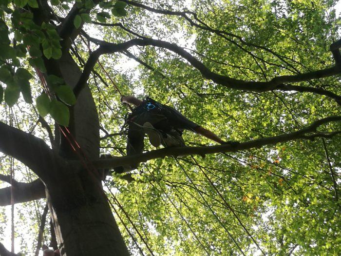 Baumpflege Totholzentnahme